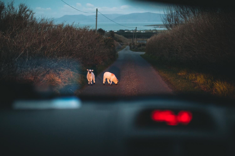 post_irlanda-189
